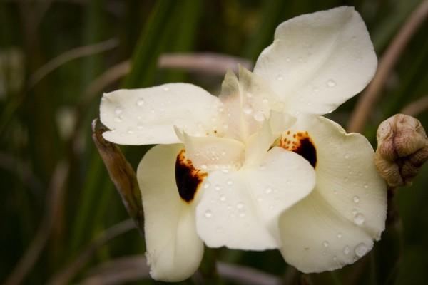 Una orquídea blanca con gotas de rocío