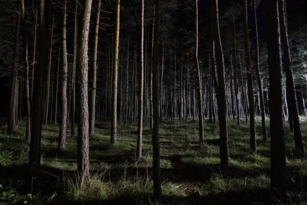 Noche en el bosque