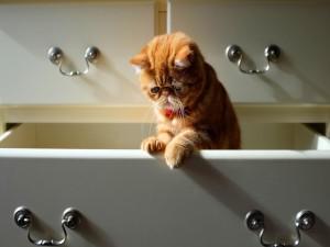 Un gato dentro del cajón
