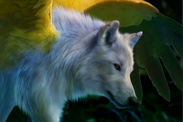 Un gran lobo blanco con el ojo de color fucsia