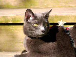 Un gato oscuro con ojos brillantes
