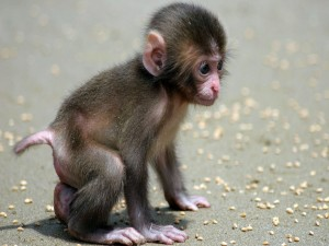 Postal: Un mono bebé