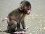 Un mono bebé