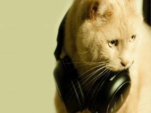 Un gato relajado con la música