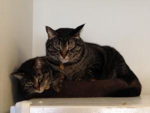 Postal: Dos bonitos gatos