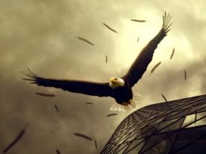 Las plumas de un águila en el aire