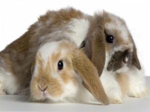 Dos lindos conejos
