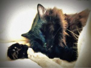 Un gato negro dormido