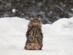 Postal: Un bonito gato bajo la nieve
