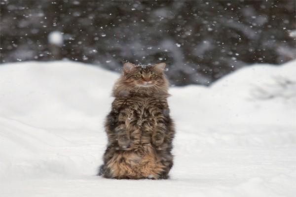 Un bonito gato bajo la nieve