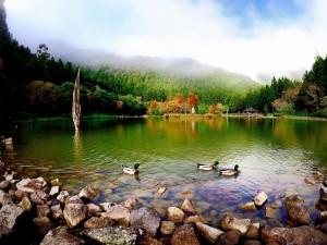 Patos en un bonito lago