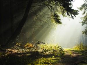 El sol penetrando en el bosque