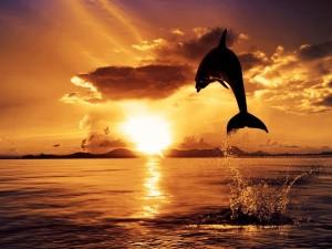 Un delfín saltando en el mar al atardecer