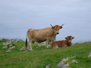Vaca en el prado junto a su ternero