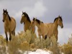 Cuatro hermosos caballos