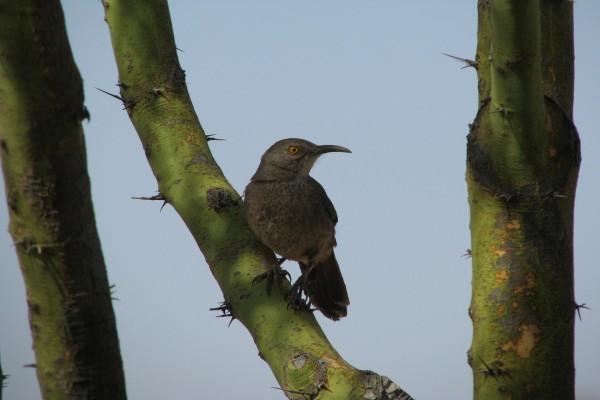 Pájaro con gran pico posando en un tronco