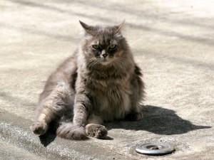 Un hermoso gato sentado en la calle