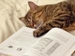 Gato dormido junto a un libro