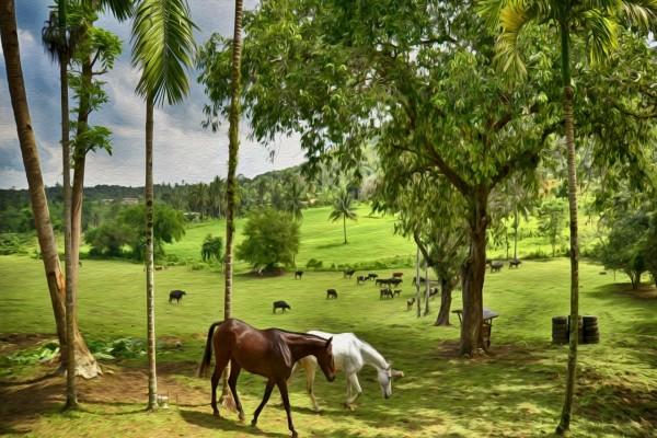 Pintura de un pasto con caballos