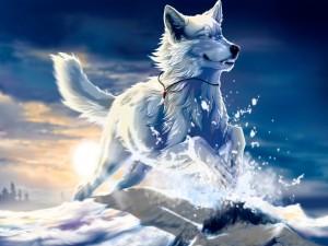 Postal: Lobo mágico corriendo por la nieve