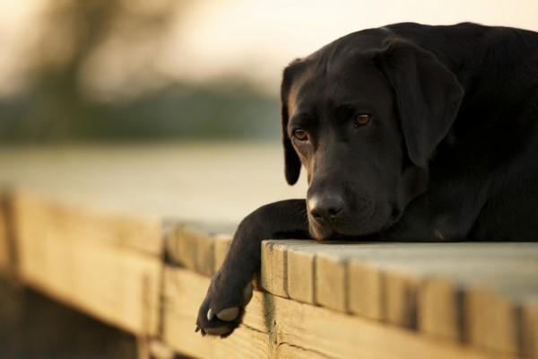 Un bonito perro negro tumbado en el muelle