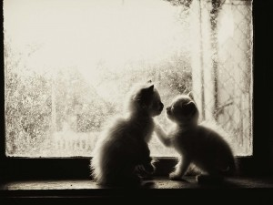 Postal: Dos gatitos junto a una ventana