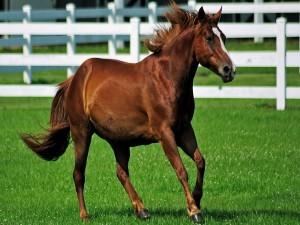 Un bello caballo marrón sobre la hierba
