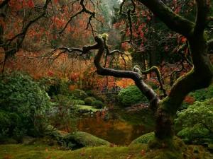 Visitando un precioso parque en otoño