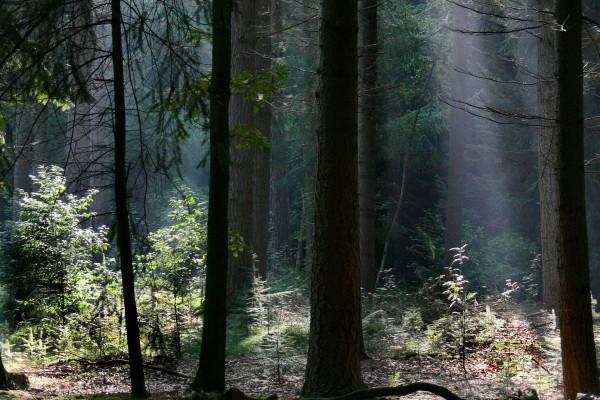 Rayos de sol iluminando algunas plantas del bosque