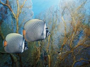 Dos peces nadando junto a unas plantas marinas