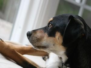 Postal: Perro junto a una ventana