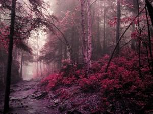 Postal: Camino en un bosque rojo