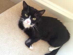 Postal: Pequeño gato negro y blanco