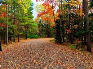 Carretera con hojas otoñales