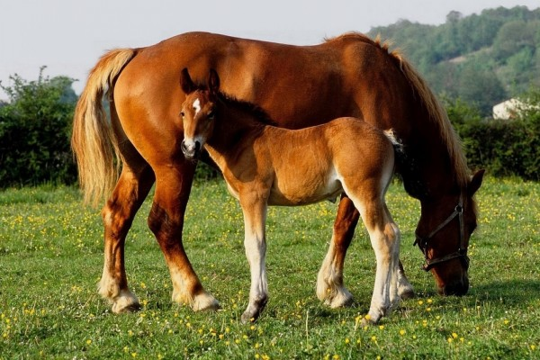 Una hermosa yegua con su potrillo