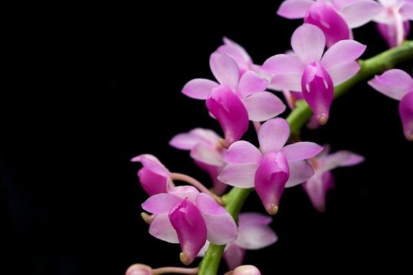 Rama con bonitas flores rosadas