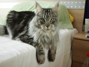 Un bello gato sobre una cama