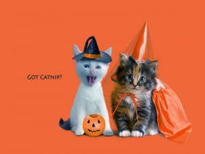 Postal: Pareja de gatos en Halloween