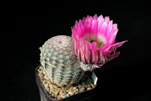 Cactus con una bonita flor