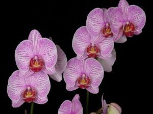 Una bella orquídea con muchas flores