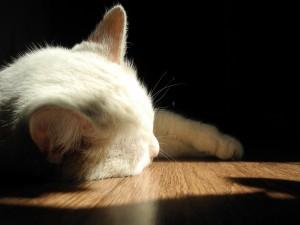 Luz sobre un gato blanco dormido