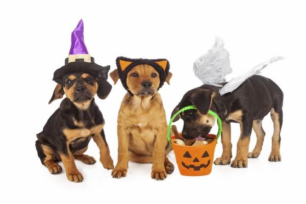 Tres perros disfrazados en Halloween