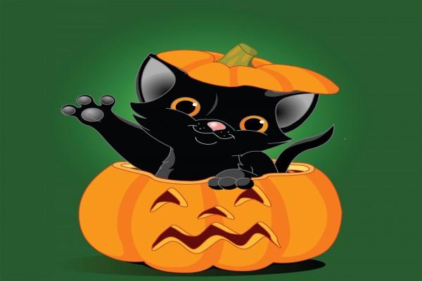 Calabaza de Halloween y un gatito negro