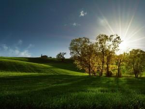 Los brillantes rayos del sol asomando detrás los árboles
