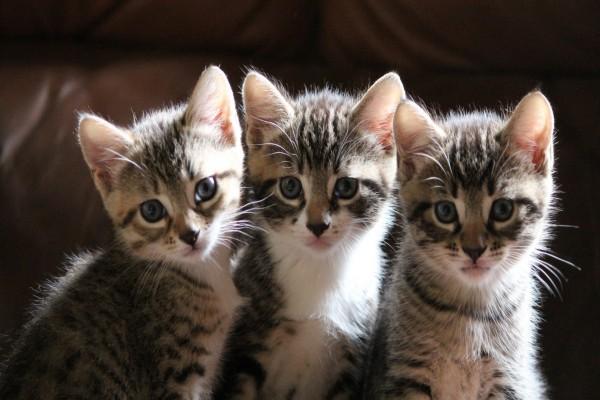 Tres bellos gatitos
