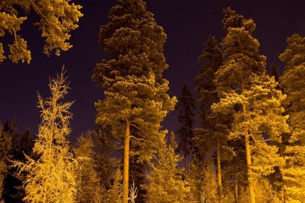 Grandes árboles en una noche estrellada