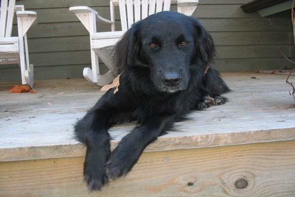 Un perro negro tumbado en el porche