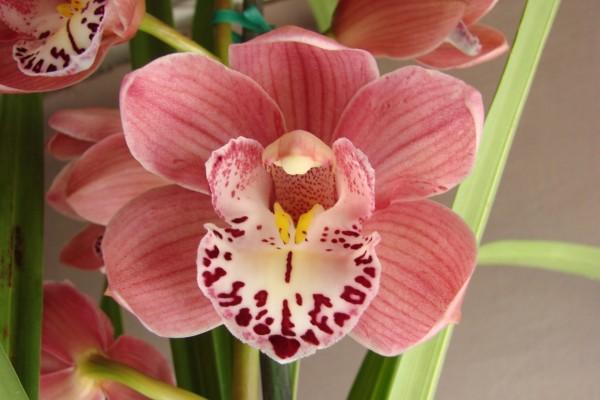 Orquídea con un bonito color