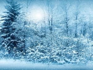 Postal: Copos de nieve cayendo sobre los árboles