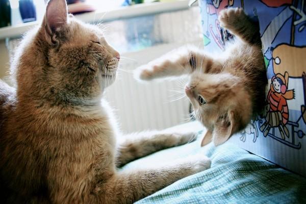 Gatito juguetón dentro de una caja